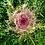 Thumbnail: Kale 'Peacock White'