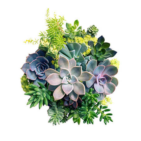 WATERING YOUR SUCCULENTS: A FINE LINE.
