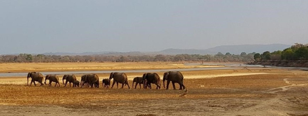 Elephants%20on%20the%20Move-2_edited.jpg