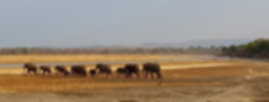 Elephants on the Move-2.jpg