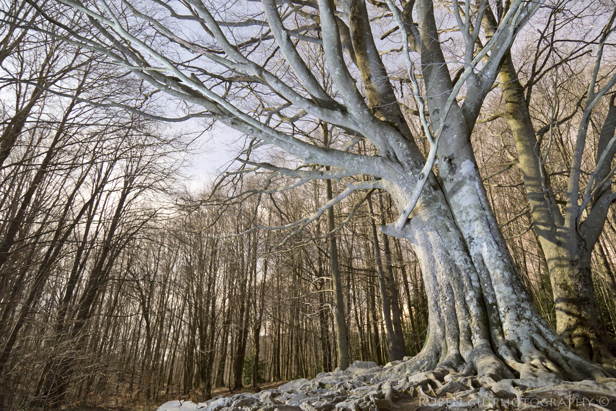 Medianoche en el bosque