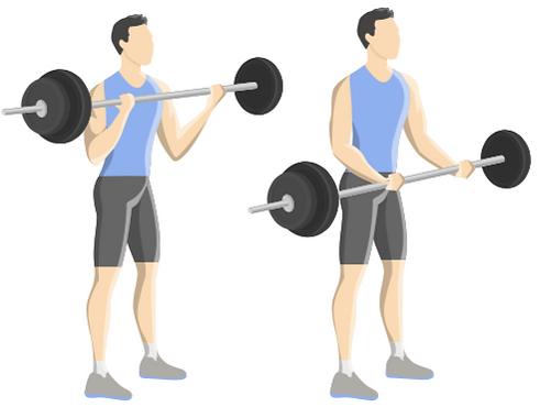 Biceps med skivstång.png