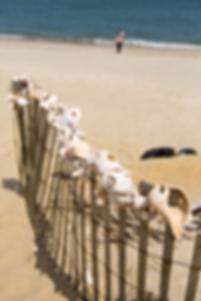Snäckor på stranden