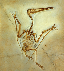 Pterodactylus, flygödla