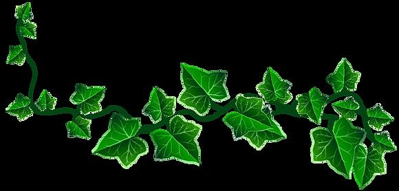 Vine_Ivy_Decoration_PNG_Clipart_Picture.