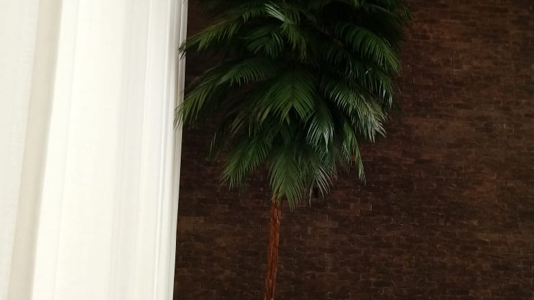 Coqueiro Tropical Preservado (2.20m)