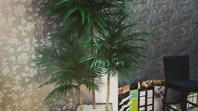 Coqueiro Guaruja Preservado