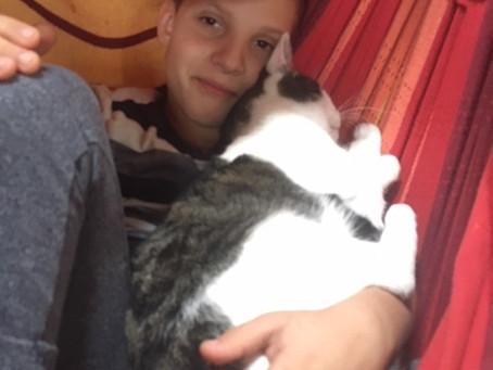 A gyógyító macska halála