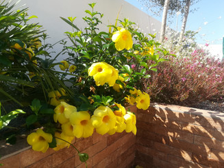 Brining colour into your Algarve garden
