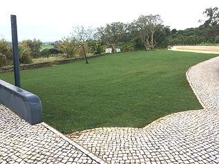 Stefan lawn after.jpg