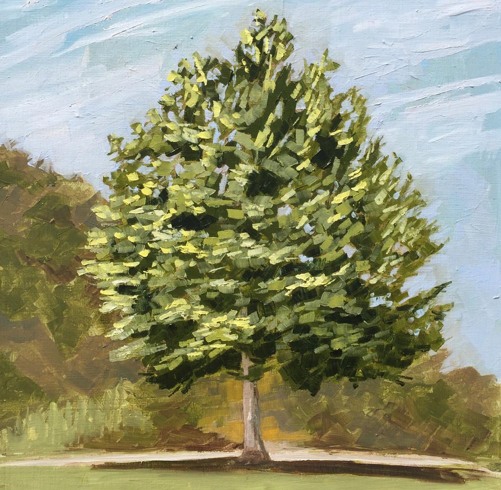 Tree in Silves