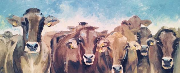 Cows - FOR SALE see below