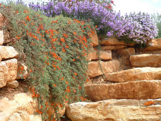Stone steps and rockeries