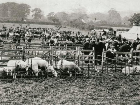 The Britford Sheep Fair