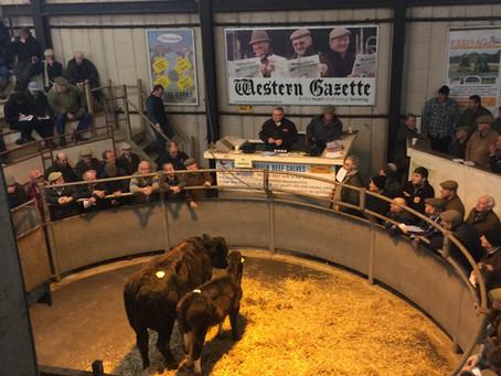Shaftesbury Livestock Market