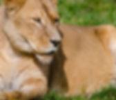loewe-zoo-bernsteinticket-slide2.jpg