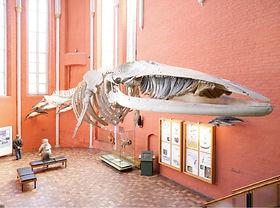 meeresmuseum-bernsteinticket-wal.jpg