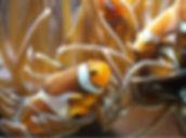meeresmuseum-bernsteinticket-aquarium.jp