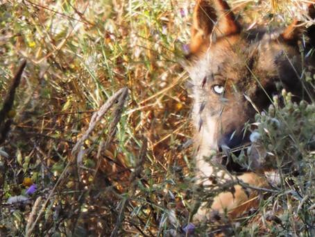 Visita ao Santuário de Lobos em Mafra