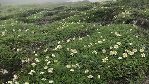 大雪山赤岳第4雪渓は16.4度c