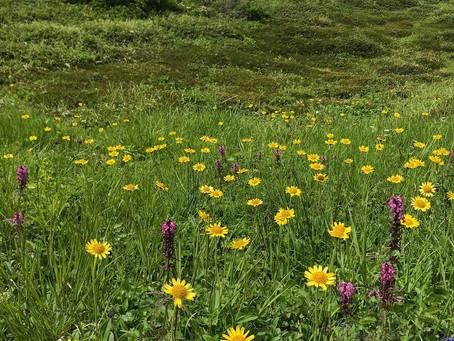調査地も山全体が花盛り