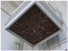 Animal and pest contamination and nesting in a commercial building.