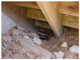 Structural damage from a pest or wildlife infestation can cost thousands of dollars in damage to a commercial building.
