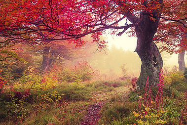 forêt d'automne yoga rennes