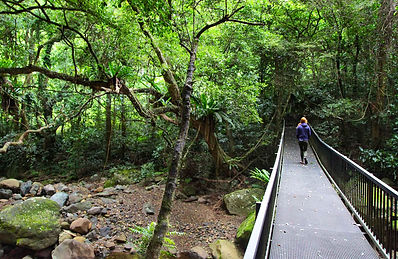Minamurra rainforest.jpg