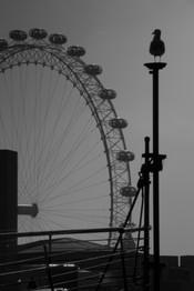 watching london eye.jpg