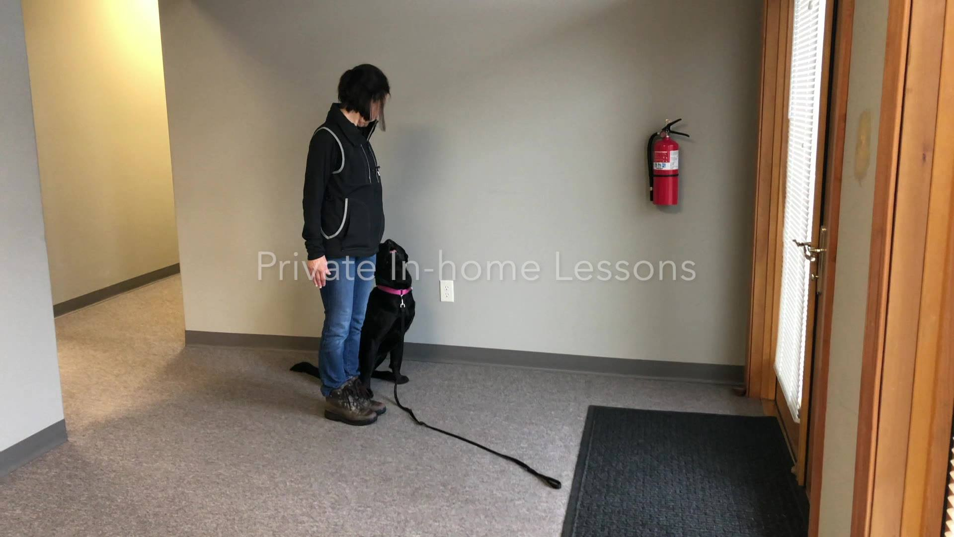 Private In-home dog training lessons