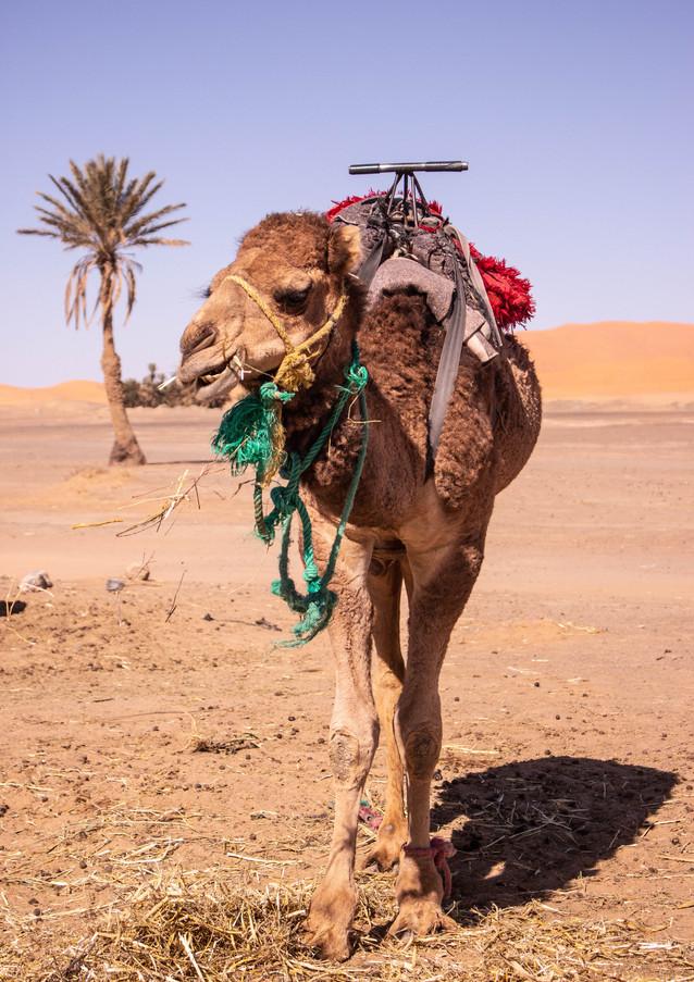 Marruecos (29 of 67).jpg