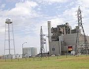 WFECmooreland-plant-1.jpg