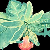 tropical-plants.webp