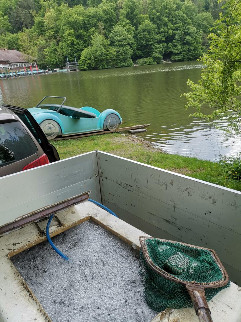 Fischbesatz Thalersee