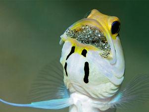 uw sun reef (1).jpg