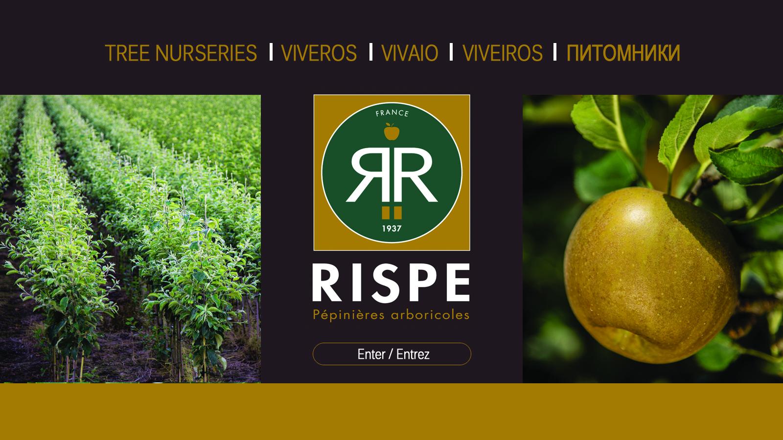 Site Internet RISPE