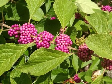 Florida Native Nectar