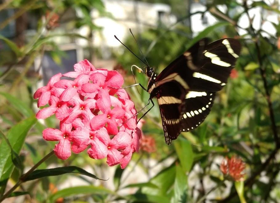 Nectar stop