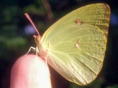Photographing Butterflies: 13 Lucky Tips
