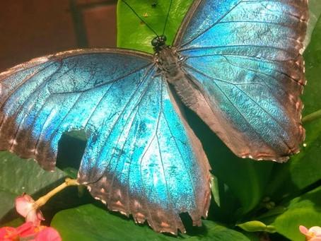 Hard Butterfly Truths