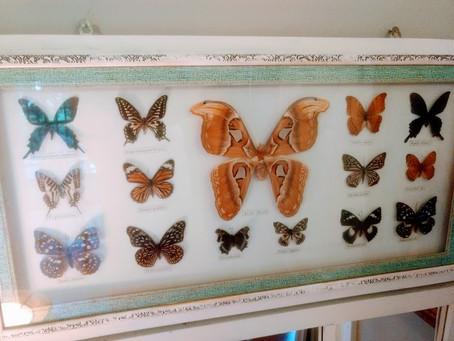 Butterfly Art & Ethics