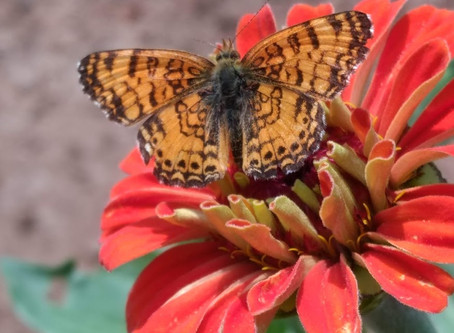 Butterfly Gardens and Bees