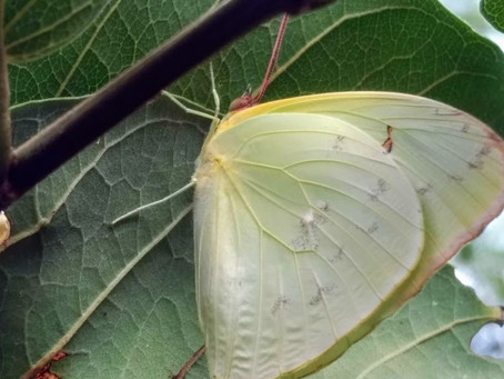 Best Kept Secret (Statira Sulphur)