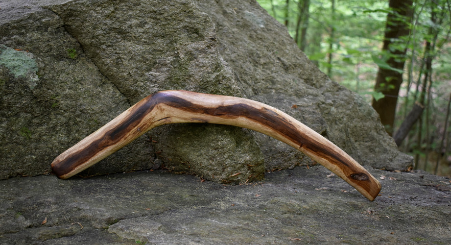 Oak Root Throwing Stick