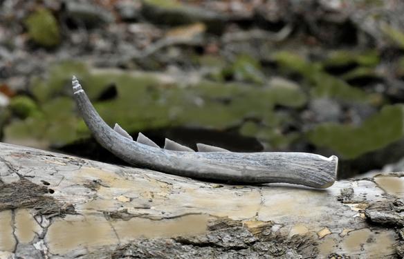 Neolithic Sickle Replica(Karanovo site, Bulgaria)