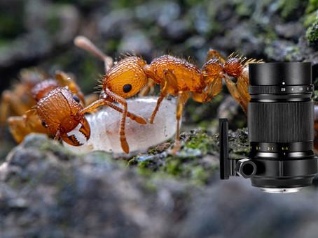 Das neue Zhongyi Mitakon Creator 85mm f/2.8 1-5X Super-Makroobjektiv