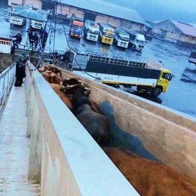 Livestock discharge