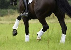 stable_gaiters