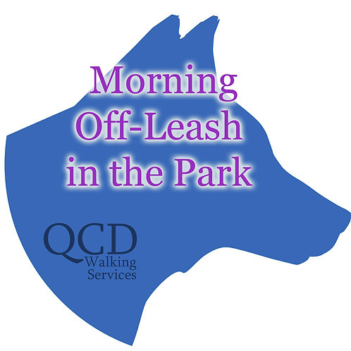 10 Pack: Morning Off-Leash in The Park